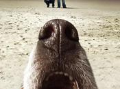 (Pilote Terriers cop-show alternatif détectives privés décontractés