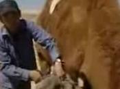 Documentaire poil chameau