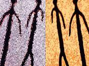 Ombres parmi ombres (Alain Mabanckou)