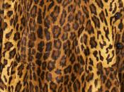 cape léopard Topshop pour hiver