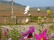 substantifique moelle vigne