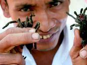 Araignées grillées Skun, Cambodge