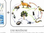 L'écosystème