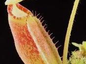Nouvelles plantes carnivores boutique
