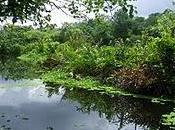 Quelques endroits (encore) naturels Singapour