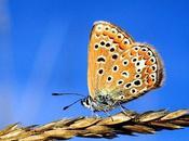 poésie: ALPHONSE LAMARTINE: Papillon