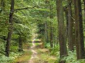 Acheter forêt placement vert 21ème siècle