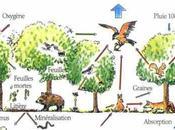 Exemples d'écosystèmes Forêt milieu lentique
