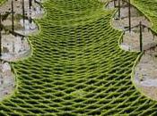 Récolte algues