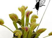 plantes carnivores pleine forme avec Grow-up