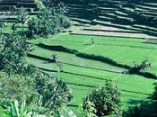 Bali, juin 1993