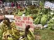 Cameroun développement l'agriculture