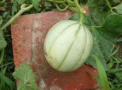 légumes fruits notre jardin