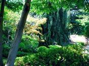 Cheminant dans jardins Albert Kahn, avec appareil photo