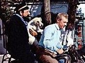 Tintin gelée