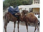 Maroc Visite Tanger