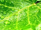 vert pour mardi arc-en-ciel