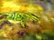 Froggy l'évanescente Aquarelle