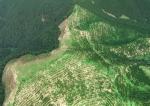 Nouvelle-Zélande veut faire biocarburant avec bois…