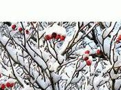 d'hiver André Bucher