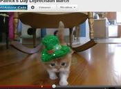 star jour chaton Saint Patrick