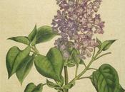 Floriography langage fleurs dans l'Angleterre victorienne