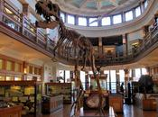 Musée Redpath