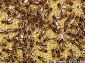 pesticides font mourir abeilles désorientation