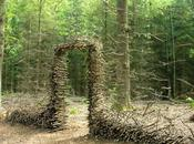 Entrée forêt