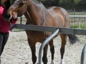 nouveau changement blog cheval