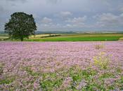 L'Yonne fleur