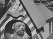 Nina Leen Maisons design pour chiens 1956