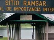 L'ananas honte envahit Caño Negro, patrimoine mondial l'UNESCO