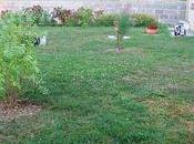 nouveaux arbustes dans jardin....poligala myrtifolia, tamaris pink grenadier fleurs