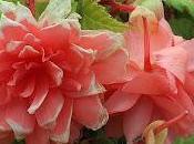 fleurs comestibles cultivées commercialisées Saguenay