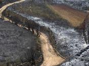 milliers gens évacués Canaries après incendies