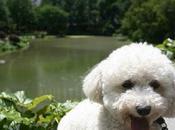 Avec animaux compagnie Central Park York