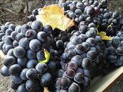 Tarte vigneronne raisin