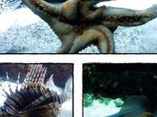 Visite l'Aquarium Rochelle (2ère partie), septembre 2012