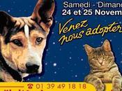 FONDATION ASSISTANCE ANIMAUX Participez Noël animaux abandonnés novembre prochain Porte Versailles (75015 Paris)