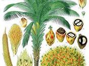 L'huile palme, point aliment contesté