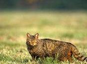 Bavure chasse Maxey-sur-Vaise burne alive