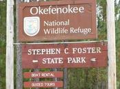 Marais d'Okefenokee