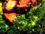 Poêlée Brocolis Shiitakés Sauce Huitre