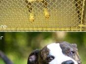 belle photo aurait impact positif l'adoption chiens refuge