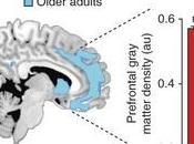 TROUBLES SOMMEIL liés perte mémoire chez personnes âgées Nature Neuroscience