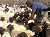 Somalie soutien santé animale faveur plus personnes