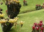 Broméliacées, étranges plantes épiphytes, visite Martinique