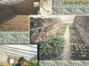 serres souterraines alternative ingénieuse jardin