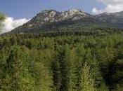 ForêtS EternuE